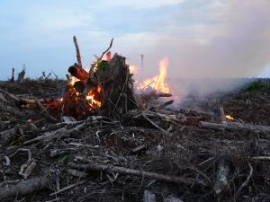 Fire-setting to clear land for palm oil